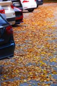 fall leaves on your asphalt parking lot